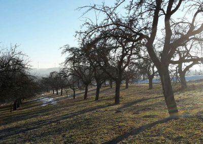 Unsere Streuobstwiese im Winter